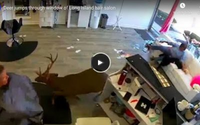 Deer jumps through window of hair salon