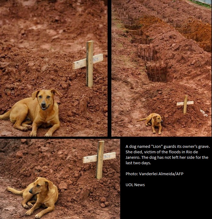 Loyal dog lays by owner's grave